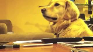 Music Makes This Dog Smile!