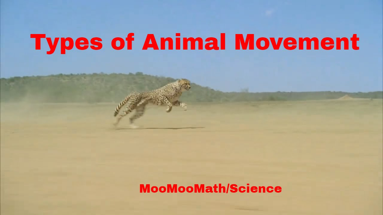 Life Science-Types of Animal Movement - YouTube