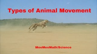 Life Science-Types of Animal Movement