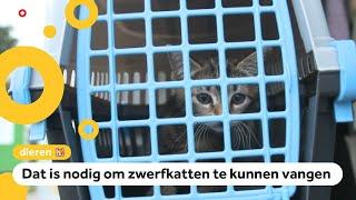 Honderden huiskatten gechipt op Texel