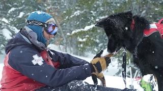 Avalanche Rescue Dogs | World of Adventure
