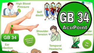 gb 34 acupuncture point