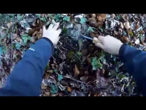 Truffle Hunting UK