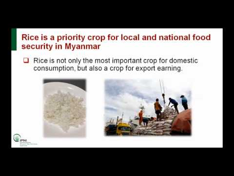 Agricultural Opportunities in Myanmar