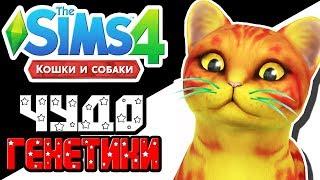 The Sims 4 Challenge   Чудо генетики   Кошка