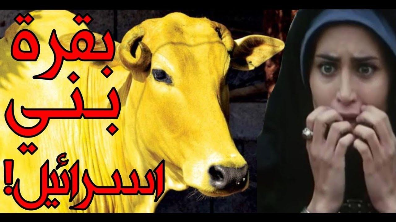 قصة سورة البقرة التي يجهلها المسلمون ويعلمها اليهود ومن هو صاحب البقرة الحقيقي Youtube