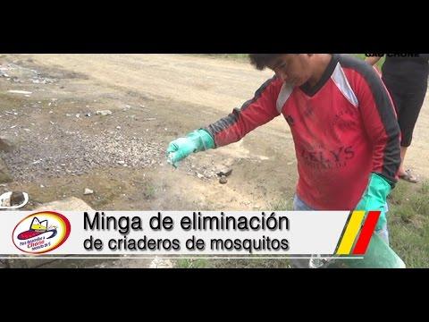 Minga de eliminación de criaderos de mosquitos