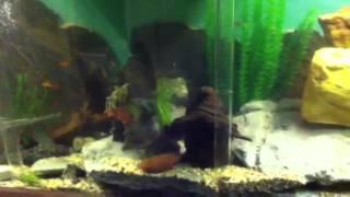 Diy Plywood Fish Tank