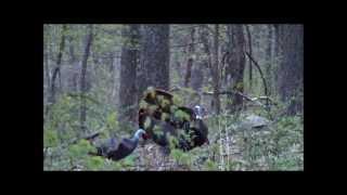 Upside Down Outdoors- Virginia Spring Turkey Hunt!