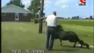 فيديو احصنة مضحك