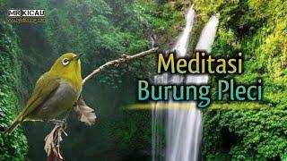 Gambar cover AUDIO TERAPI BURUNG PLECI | Anti stresss