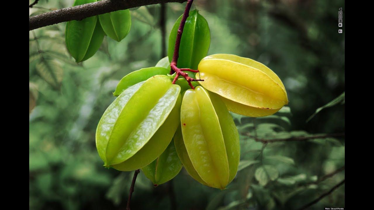 star fruit carambola tree transplants, Beautiful flower