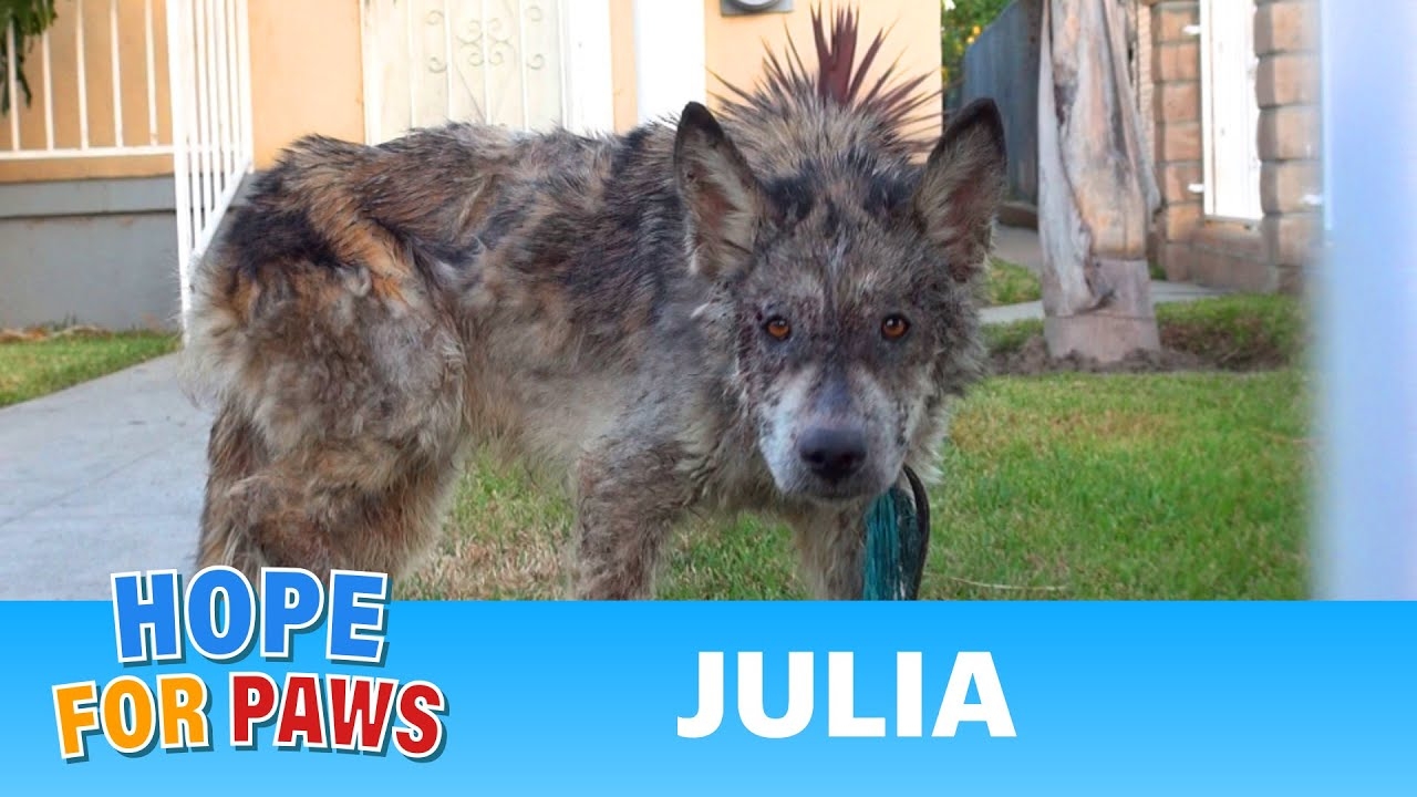 Julia A Wolf A Coyote A Dog This Rescue Is A Must See