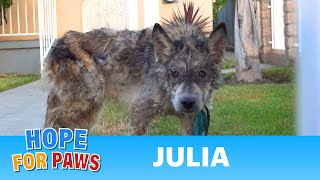 Julia: a wolf?  a coyote?  a dog?  This rescue is a MUST SEE! thumbnail