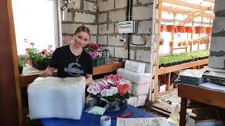 Отправка и упаковка  пеларгоний + вегетативная петуния , а так же обзор зимних теплиц .