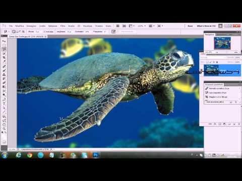 PsBlog#1: Il Modo più pratico per fare Fotomontaggi (IlWindows7)