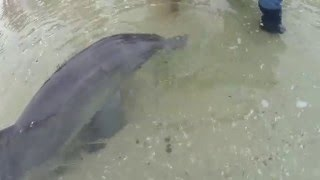 Dolphin sprays me w/ blowhole (Puck) @ Monkey Mia