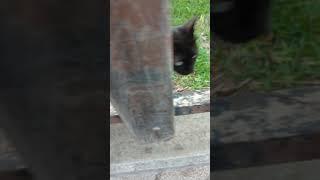 Смешной кот мяукает и играется со мной через забор. Funny Cat Play Meow. Kucing Lucu. Lustige Katzen