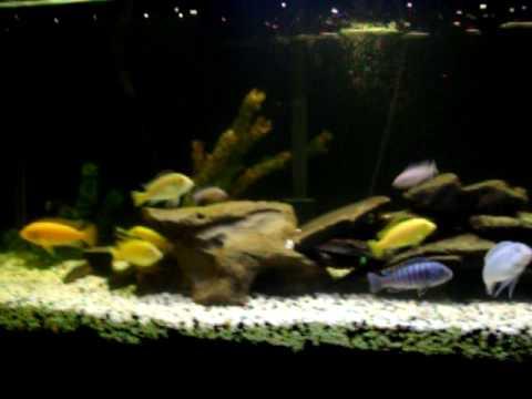 Rachel Weisz Mummy Blog: goldfish tank mates