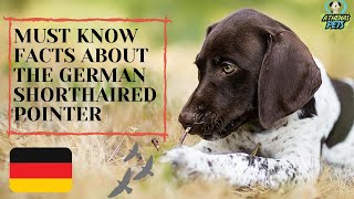 Getting To Know Your Dog's Breed: German Shorthaired Pointer Edition