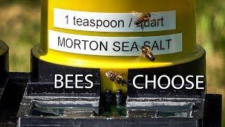 Honey Bees Need Salt and Minerals, Sea Salt Preferences, Pink Himalayan Salt thumbnail