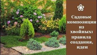 садовые композиции из хвойных растений: правила создания, идеи