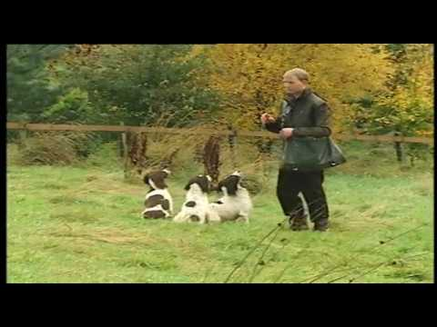 MODERN GUNDOG TRAINING SPRINGER SPANIEL PART 4