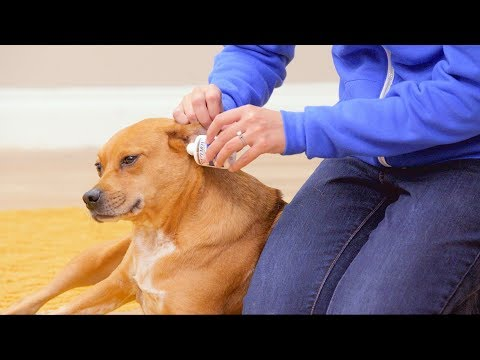 Zymox Ear Solution For Dogs And Cats | Chewy
