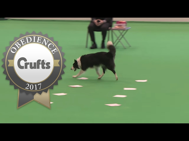 Obedience Championship - Bitches - Scent - Part 5 | Crufts 2017