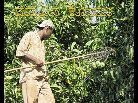 """ Improved Mango harvesting"". ಮಾವಿನ ಕೋಯ್ಲಿನ ಉಪಕರಣ""-9-5-18 at 1.30pm."