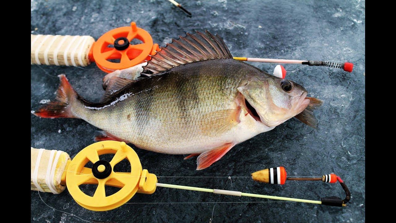 Зимняя рыбалка. Вся рыба клюет на мясо. Что за приколы?