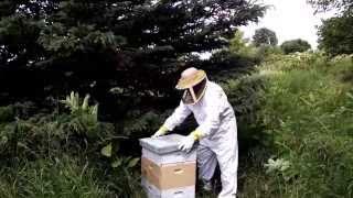 Part 2 Michigan Wild Honey Bee Swarm Capture Attempt