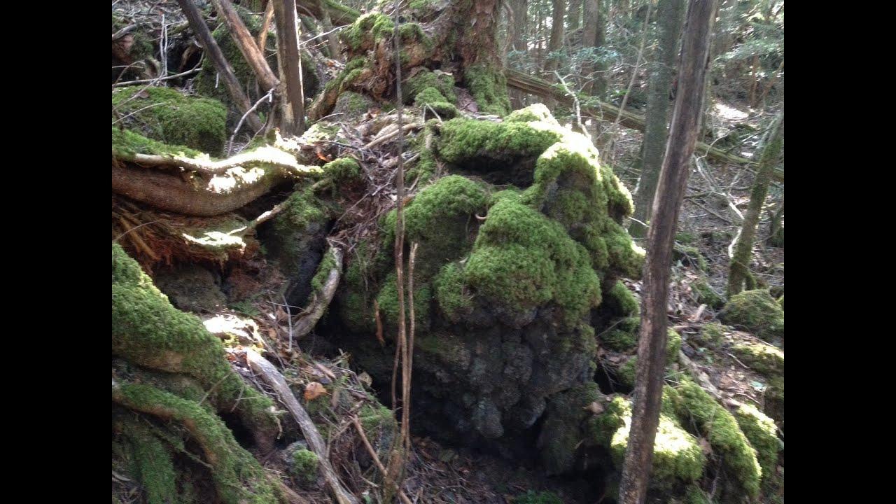 "Aokigahara Jukai ""Suicide"" Forest"