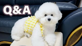 My Dog Answers Hęr First Ever Q&A