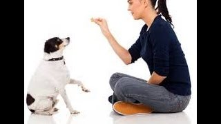 Pro Dog Training | Teach Your Dog To Catch A Frisbee | Dog Traning Video
