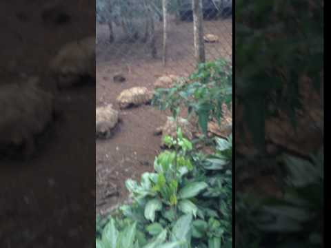 costa rica zoo tortoises