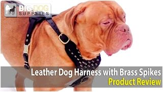 Dogue De Bordeaux, Giant Schnauzer And German Shepherd Wearing Brass Spiked Dog Harness