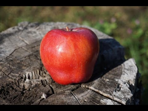 Осенние сорта яблони - красивые, вкусные, зимостойкие | рождественское | жигулевское | ульянищева | полосатое | орловское | орловский | осенние | кандиль | яблоня | яблони
