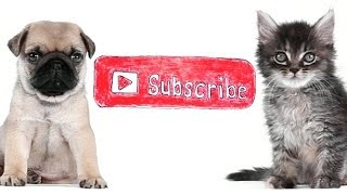 Subscribe to The Pet Collective
