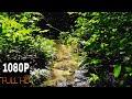 белый шум лесной ручей