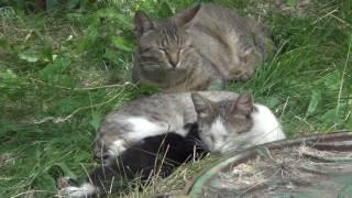 мама котёнок и младенец котёнок и папа кот