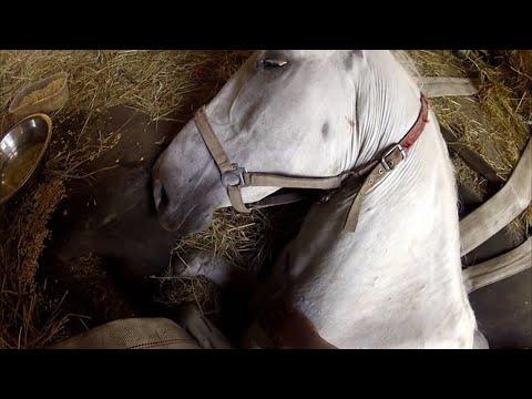 Хозяин умолял свою лошадь не умирать. То, что случилось дальше, не передать словами