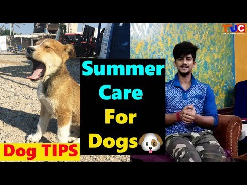 Summer Care For Dogs : Dog TIPS : TUC
