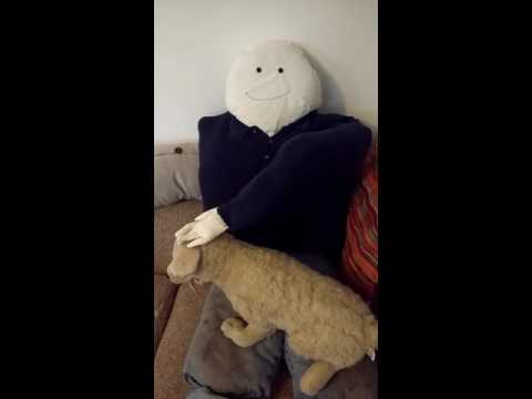 MEET BOB: The Boyfriend Pillow for Dogs (with Auto-Petter)