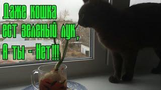 Кошка ест зеленый лук! Смотреть всем!