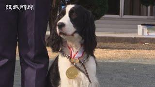 県警の警察犬と警察犬指導士の嘱託書交付式が19日、茨城町上石崎の県警...