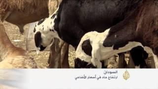 ارتفاع حاد لأسعار الأضاحي في السودان