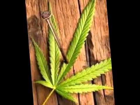 smoking weed de kodigo 36