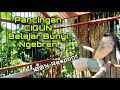 Pancingan Suara Ciblek Gunung Ngebren Agar Cigun Muda Cepat Bunyi Bren Speed Rapat  Mp3 - Mp4 Download