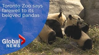Toronto Zoo says farewell to its beloved pandas
